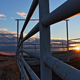 Cattle Pens - Catheys Valley by Cheryl Petretti - Landscapes Prairies, Meadows & Fields ( mariposa, catheys valley, sunset, cattle pens, cowboy up )