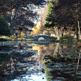 Queenstown Government Gardens by John Herold - City,  Street & Park  City Parks ( reflection, queenstown, park, gardens, government )