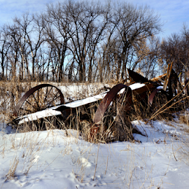Wagon Wheels ! by Jan Siemucha - Transportation Other ( winter, wheels, snow, wagon, trees, weeds )