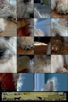 Screenshot of Dog Puzzle: Airedale Terrier