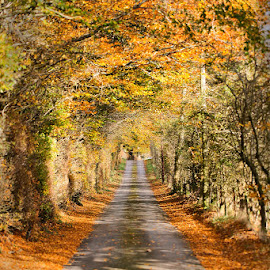 Autumn Road in Wales by Buzz Covington - Landscapes Forests ( uk, wales, autumn, fall, road, country road,  )