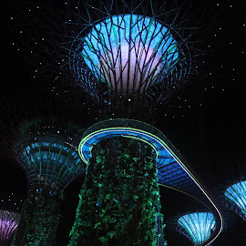 Super Tree Structures by Michael Loi - Novices Only Objects & Still Life ( garden by the bay, night, super tree, sg )