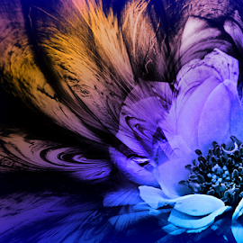 ANGLE by Carmen Velcic - Digital Art Abstract ( abstract, purple, blue, roses, flowers, digital )