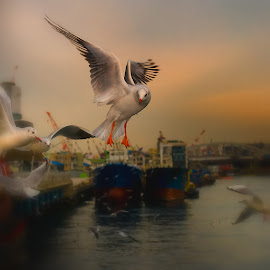 Waiting by Daniel Set - Animals Birds ( bird, flying, busan )