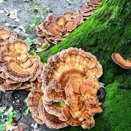 mushrooms on the moss .. by Dubravka Penzić - Nature Up Close Mushrooms & Fungi