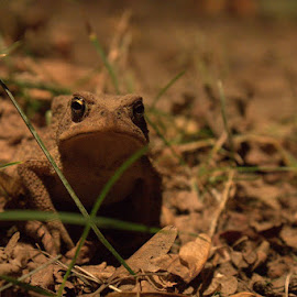 by Sarah Benoit Weir - Novices Only Wildlife ( toad )