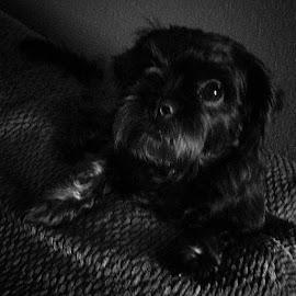 Princess... by Cinthia Brito Pabon - Novices Only Pets (  )