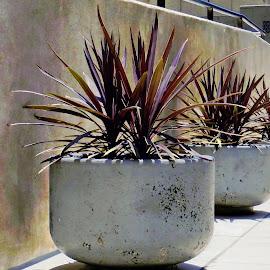 Potted Plants by Tricia Scott - Buildings & Architecture Other Exteriors ( potted, plants, landscape, sidewalk, city )