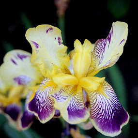 Orquidias by Graça Cortez - Flowers Flowers in the Wild