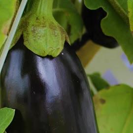 by Denise Dunkley Hall - Food & Drink Fruits & Vegetables