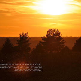 Thoreau's Sunset by Taylor Gillen - Typography Quotes & Sentences ( nature, silhouette, sunset, woods, henry david thoreau )