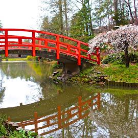 Oriental Gardens by Kathy Suttles - City,  Street & Park  City Parks (  )