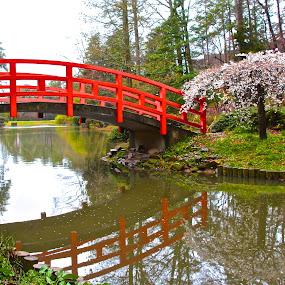 Oriental Gardens by Kathy Suttles - City,  Street & Park  City Parks ( red bridge, suttleimpressions, oriental bridge, reflections, spring, duke university gardens )