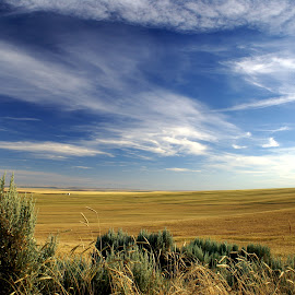 Wheat and clouds by Gaylord Mink - Landscapes Prairies, Meadows & Fields ( sagebrush, clouds, wheat field, view, landscape,  )