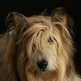 Fabio...forget Fabio meet Elvis. by Jacqui Sjonger - Animals - Dogs Portraits ( dog portrait )