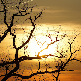 When the sun goes down by Sherena George - Nature Up Close Trees & Bushes ( nature, tree, sunset, sun,  )