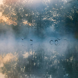 Early Dawn by Nancy Lacy - Landscapes Sunsets & Sunrises ( dawn, illinois, fall, morton arboretum, lake marmo, geese, anne lacy, mist )
