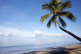 Coconut tree over the Sheraton Fiji beach