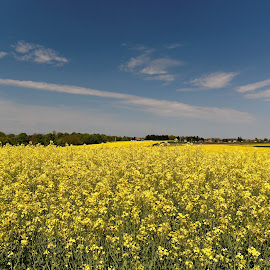 fields of yellow by Darko Kovac - Landscapes Prairies, Meadows & Fields