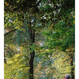 Old couple enjoying the silence by Joel Arys - People Couples ( tree, autumn, couple, leaves, woods, sun )