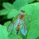 Scorpion Fly ?