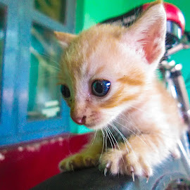 Cute On the top by Syam Kumar - Animals - Cats Playing ( cycle, kitten, cat, fun, cute )