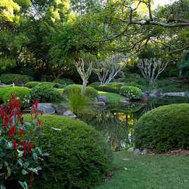 Botanical Gardens, Brisbane by Roger Arnaud - City,  Street & Park  City Parks