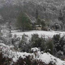 Winter Wonderland by Mike Geyer - Landscapes Forests ( nature, snow, weather, forest, landscape )