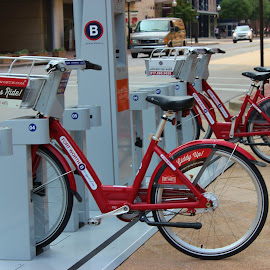 Rent one Today by Sherri Murphy - Transportation Bicycles