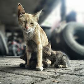Tickle by Budi Kurniawan Setiawan - Animals - Cats Kittens ( focus photograohy, budi zhang )