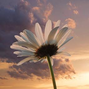 The sky is the limit. by Carolyn Kernan - Flowers Single Flower (  )