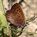 Almeida copper