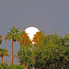Moon set by Marjorie Sammo - Landscapes Deserts