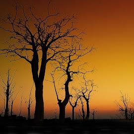 Moringa sunset by Efraim van der Walt - Landscapes Sunsets & Sunrises ( sunset, trees,  )