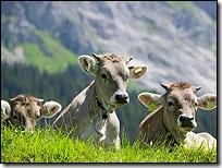 cow200
