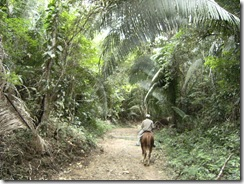 horse taau