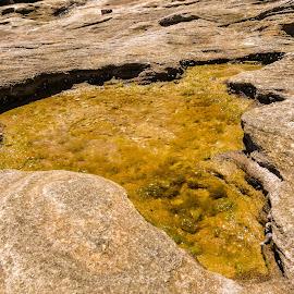 Lake on a stone?  by Loh Jiann - Nature Up Close Rock & Stone ( rock, beach, bondi, formation )