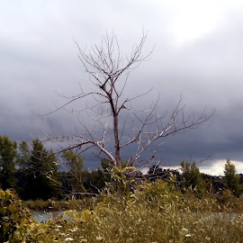 Storm Approaches by Jen Rhora - Landscapes Weather ( water, meadow, lake, storm, dead tree )