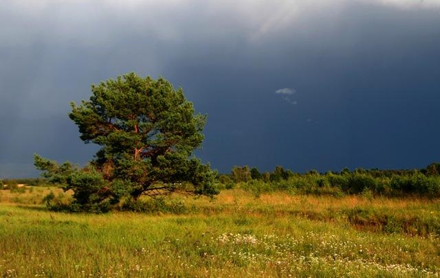 vihm_tuleb
