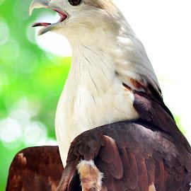 r by Sandi Nopri yanto - Animals Birds