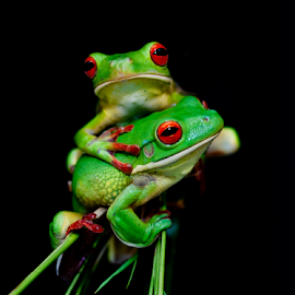 by Robert Cinega - Animals Amphibians