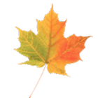 Autumn Leaves Free LWP icon