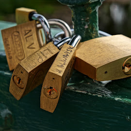 Padlock by Shona McQuilken - Artistic Objects Other Objects ( fence, green, lock, gold, bridge, key, padlock )