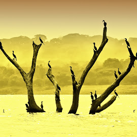 birds compo by Dmitry Samsonov - Landscapes Waterscapes ( old tree, yellow, central america, birds, branches, el salvador )