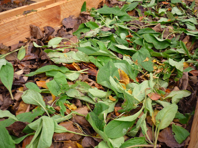 Filled bed with comfrey on top