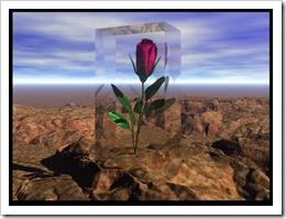 flor_deserto_8