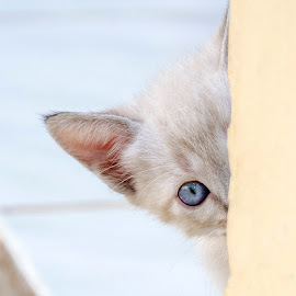 cute cat by Enzo Davide - Animals - Cats Kittens ( cat,  )