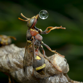 Wasp Blowing Water Ball 150128C by Carrot Lim - Animals Insects & Spiders