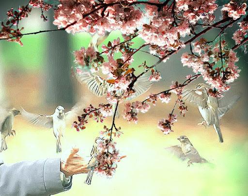 http://lh4.ggpht.com/rubensada/SM3Ib-QrQ5I/AAAAAAAABPk/upumwikPupI/Primavera-y-gorriones.jpg