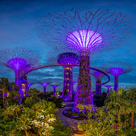 Super Trees at Gardens By The Bay, Singapore by Carol Kheng - City,  Street & Park  City Parks ( #singapore, #supertrees, #gardensbythebay )